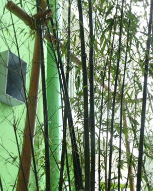 35 logements, une fosse à bambous et des bambous